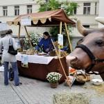 farmarske trhy